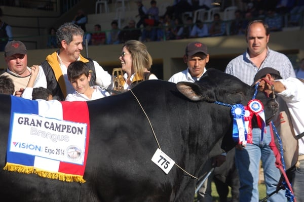 international-gran-campeon-brangus-600X399