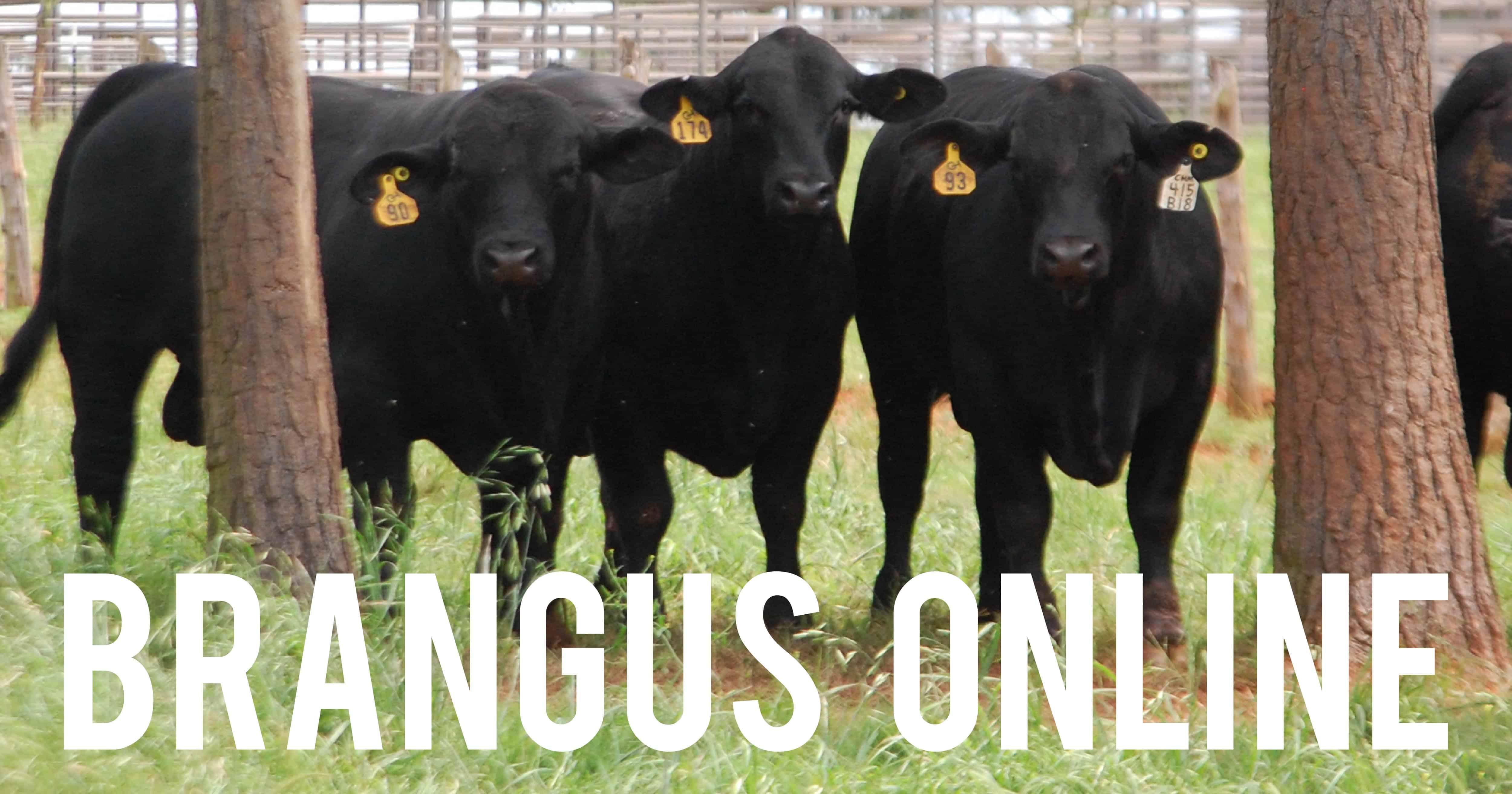 trichomoniasis in cattle